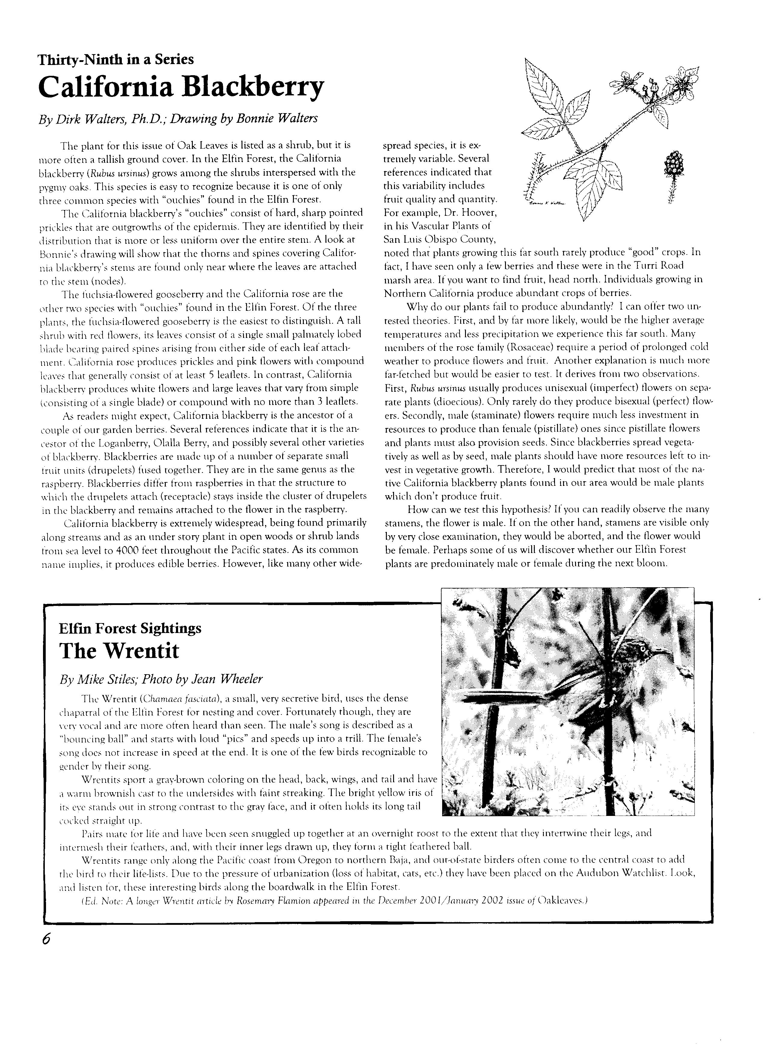 Elfin Forest - Forest Library - Oakleaves Page Index